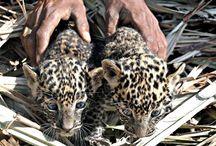 leopard print.❤❤❤❤