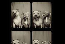 Cutsie animal love
