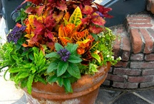 Container Gardening / by Marilyn Humble