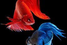 Fish.