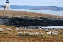 nash island yarn