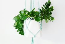 My macrame plant hangers / Hand made macrame plant hangers.