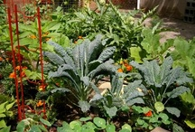 Edible front garden / by Lavender Rose Cottagey