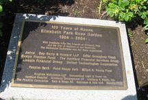 """Elizabeth Park Rose Garden / """"the first municipal rose garden in the United States and the third largest rose garden in the country today. Theodore Wirth began the design of the rose garden in September of 1903, and it opened in June 1904. The rose garden began with about 190 varieties of roses, and this eventually grew to almost 1,000 by the 1950s. """" from  http://elizabethparkct.org/rose-garden.html"""