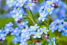 особенные цветы для моей души