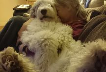 Собака моей мечты