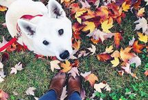 Dogs worth falling for! / Leaves, thanksgiving, Halloween... all things fall!