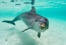 Dolphins / by Francisca Irribarra