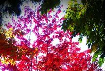 kaunis luonto