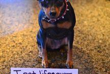 Dog Hall of Shame