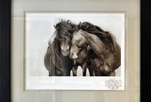 Roberto Dutesco / #robertodutesco #photography #horses #art #homedecor
