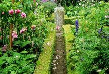 Garden & flowers