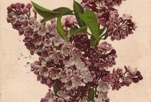 Flowers / by Russian Soul Vintage