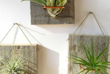 Fun with Air Plants / Fun ways to display air plants!