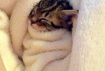 Cute cats❤