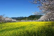 AYA MIYAZAKI JAPAN