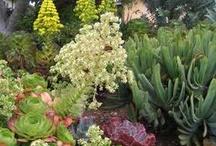 Garden stuff / by Christine Perry-burke