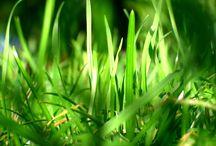 GREEN - VERT