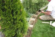 Gardening - Beds and Borders