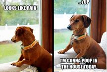 dogggggyyyyyyyy
