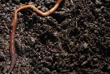 Garden - Worms