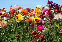 Virágok / Rájöttem , hogy minden virágot szeretek !