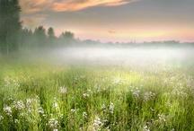 wonderfull nature
