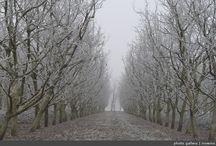 Walnut orchard winter