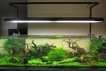 акваскейп