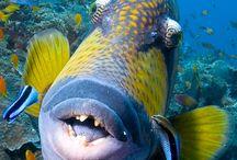 Ocean fish