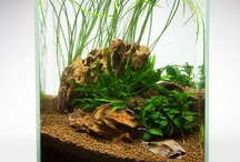 Nano aquarium inspiration