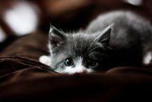 I am addicted to Kittens!!! / by Samantha Rogers