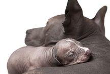 xoloitz. ......dog love