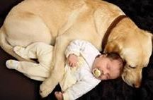 Animal Cuteness / When animals show their unconditional love and care to humans.