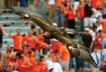 War Eagle! / by Kristine Plummer