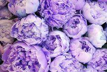 purpleeeeeeeeee....