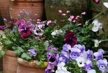 Цветы на даче
