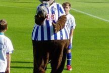 Dárdai Pál / Dárdai Pál edzői munkájához, sok tapasztalatot összegyűjtött játékosként.   Lojalitása már ekkor sem volt megkérdőjelezhető, hiszen külföldön mindvégig a Hertha Bsc alkalmazásában állt.   Így lett a klub minden idők legtöbb mérkőzést játszó futballistája. Nem véletlen, hogy edzői pályafutását is ennél a klubnál kezdte.