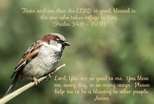 Daily Devotions / Daily verse and prayer from the Pukekohe Methodist Church website