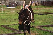Horse training ideas / by Lauren McCormick Fisher