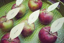 ● Wedding - Fall & apples