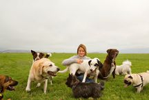 How Pets Can Improve your Health