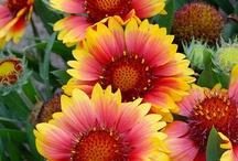 Flowers / by Gilda Hill