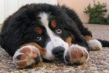 puppy loves :)