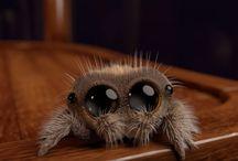 Good neighbour spider