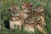Cats Rule / by Joyce Angieri