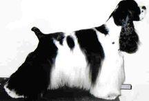 Najkrajší psy na svete