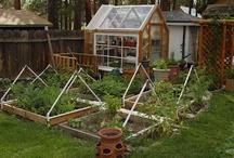 Garden & Patio / by Marya Morrison