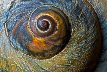 Spirals in Nature / by Jodell Egbert
