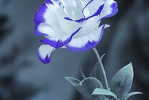 Flores / ♡